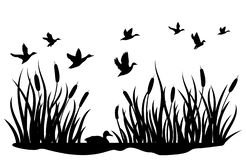 Free A Flock Of Wild Ducks Flying Over A Pond With Reeds. Black And White Illustration Of Ducks Flying Over The River. Vector Royalty Free Stock Images - 158920799