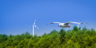 A Flying Seagull Hovers Over Sea Near By Mangrove Forest And Line Of Wind Turbines Stock Images