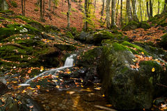 Free A Forest Landscape Royalty Free Stock Image - 34394896