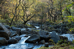 A Forest Waterfall Stock Photography