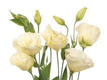 A Fragment Of Pale Flowers Isolated On White Royalty Free Stock Photo