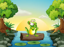 Free A Frog At The River Standing Above The Log Stock Photo - 40254010