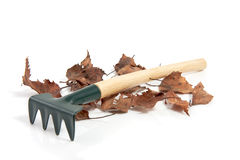 Free A Gardenrake With Dry Leaves Royalty Free Stock Photos - 12795048