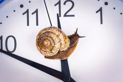 Free A Grape Snail On An Desktop Clock Stock Photos - 101122543