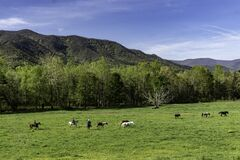 A Green Pasture Field In Cades Cove For The Riding Horses. Royalty Free Stock Photo