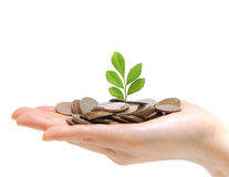 A Hand Full Of Money And Holding A Tree Royalty Free Stock Images