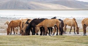 Free A Herd Of Horses Royalty Free Stock Photo - 19573605