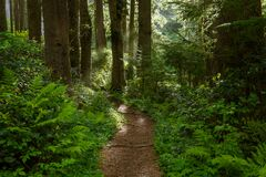 Free A Hiking Trail Lined With Ferns Curves Through A Dense Green Lush Forest Towards A Sunlit Opening Royalty Free Stock Photography - 179085317