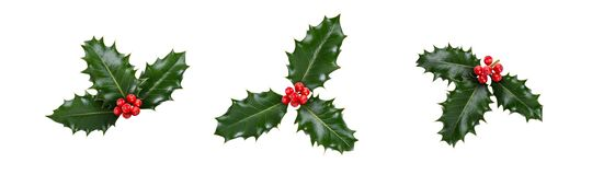 Free A Holly Sprig Collection, Three Leaves, Of Green Holly And Red Berries For Christmas Decoration Stock Images - 198235214