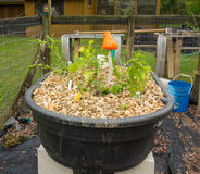 A Home-made Aquaponics Project In Florida Stock Photo