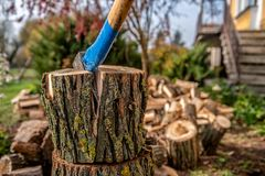 Free A Huge Stump Of Wood Broken With An Old Ax Stock Photo - 131861470