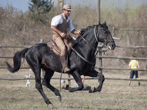 Free A Knight Of Tuscan Maremma Royalty Free Stock Photos - 28137078