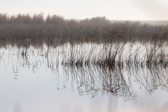 A Lake With Reeds At Dawn In The Autumn Stock Photos