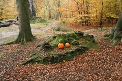 Free A Landscape View Of A Forest In The UK In Autumn With Two Carved Pumpkins Places Amongst The Roots Of The Trees. Stock Image - 131361701