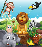 A Lion Above The Stump Surrounded With Playful Animals Royalty Free Stock Images