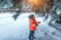 Free A Little Boy 3-5 Years Old, Stands In Children`s Skiing In Winter, Looks Up At Green Tree, Looks Surprised And Happy At Stock Photos - 158164093