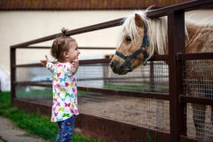 Free A Little Girl Of Caucasian Appearance Enjoys A Pony Horse In A Stable On A Farm. Stock Images - 184980564