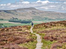 Free A Lone Female Walker On A Stone Path In The Yorkshire Dales Royalty Free Stock Image - 156217506