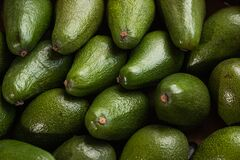 Free A Lot Of Avocado Close Up. Healthy And Tasty Food. Exotic Fruit. Royalty Free Stock Photo - 185245315