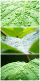 A Macro Shot Of Wet Leaves Royalty Free Stock Image