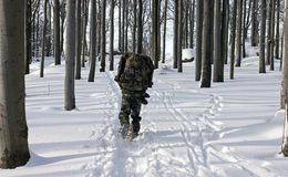 A Man In The Uniform Walking Through Winter Forest Stock Photos