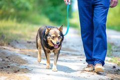 Free A Man Walking With A Dog Stock Photo - 126542630
