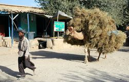 Free A Man With A Camel In Maymana In Faryab Province, Afghanistan Stock Photography - 164041072