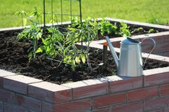 Free A Modern Vegetable Garden With Raised Briks Beds With Growing Tomato Stock Photos - 185155673