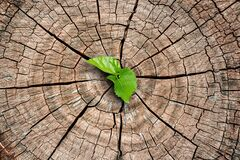 Free A New Life Start With The Sprout Of Green Leaves On A Dead Trees Stump. Recovery Of The Nature. Royalty Free Stock Photo - 177566665