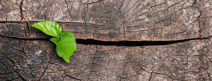 Free A New Life Start With The Sprout Of Green Leaves On A Dead Trees Stump. Recovery Of The Nature. Royalty Free Stock Images - 177567219