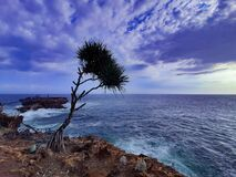Free A Palm Tree On The Edge Top Of A Cliff Rock With Sea And Cloud Sky At Sunset Royalty Free Stock Image - 209729606