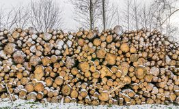 A Pile Of Logs Royalty Free Stock Photography