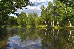 Free A Pond In The Middle Of A Forest Surrounded By Green Birches. Clouds Reflected In A Pond Stock Photography - 157170382