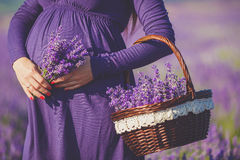 A Pregnant Woman Is Enjoying The Color Lavender Royalty Free Stock Images