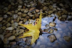 A Rainy Day In Autumn. Royalty Free Stock Image