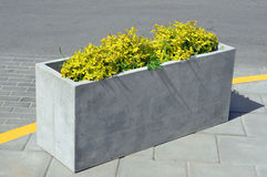 Free A Rectangular Concrete Flower Pot With A Yellow Plant Royalty Free Stock Images - 96851649