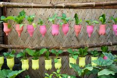 Free A Recycling Idea Using Plastic Bottles Stock Photos - 194095843