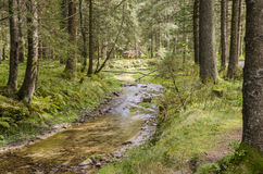 Free A River In The Forest Stock Photos - 61274503