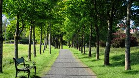 Free A Road With Green Trees In Summer Stock Photos - 191418183