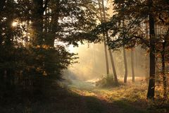 Free A Rural Road Leading Through Deciduous Forest With Most Oaks On Sunny Autumn Day The Bright Light Of Rising Sun Falls Into Royalty Free Stock Photo - 161854365
