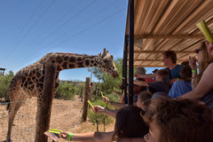 A Safari At Out Of Africa Wildlife Park Royalty Free Stock Photography