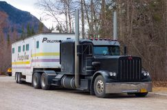 Free A Semi Pulling A Trailer Filled With Horses From A Farm In Northern Canada Royalty Free Stock Photos - 103354788