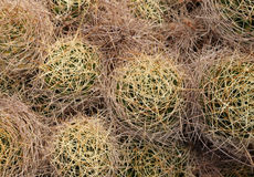 Free A Series Of Cactus With Thorns From Above Royalty Free Stock Photos - 39331648