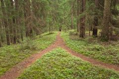 Free A Single Mountain Path Splits In Two Different Directions. It Is An Autumnal Cloudy Day.A Single Mountain Path Splits In Two Diffe Royalty Free Stock Photo - 114114915