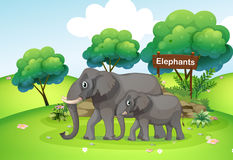 A Small And A Big Elephant Royalty Free Stock Photos