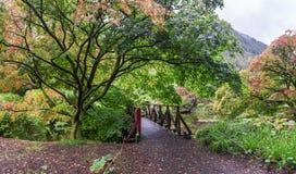 Free A Small Bridge Near Scenic Pond In Autumn Season At Benmore Botanic Garden, Scotland Stock Photo - 129765880