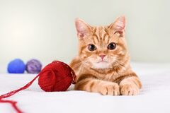 Free A Small Red-haired Kitten On A Light Bed Lies With Threads Stock Photography - 189024682
