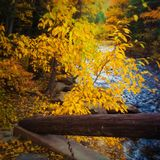 A Soft Autumn Scenic Stock Photography