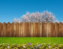 Free A Spring Bloom Tree In Backyard Stock Photos - 145099473