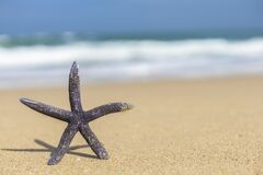 Free A Starfish On A Sandy Beach Stock Photo - 181585720
